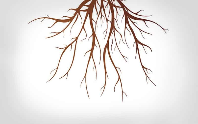 Tree Root Questions