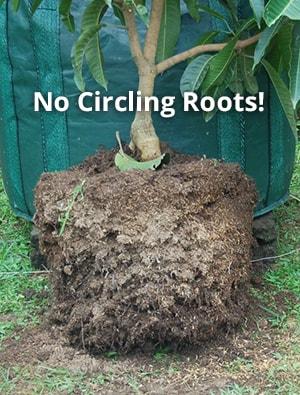 Stop Circling Tree Roots