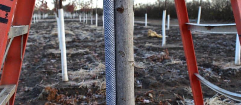 Installing Tree Stakes